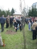 21.04.2012 r. - Brwinów, Dęby Pamięci-8